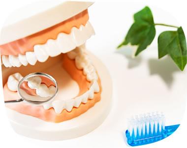 身体の健康を守るために。歯の定期健診をおすすめします!